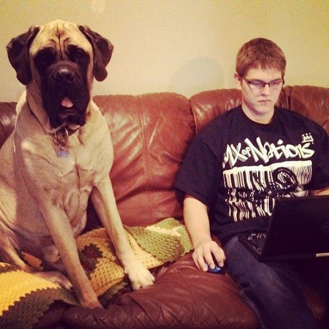 big dog photos guy laptop couch