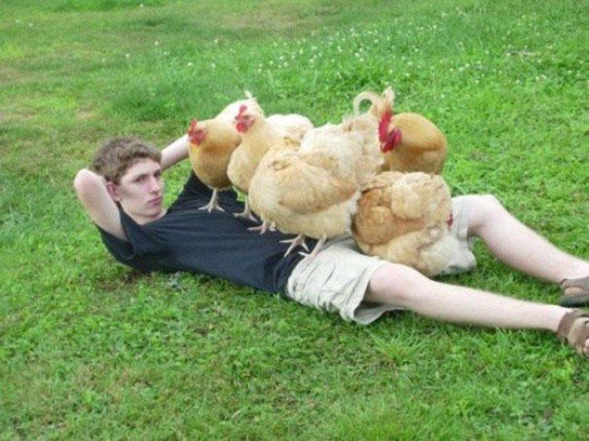 bizarre photos boy chickens