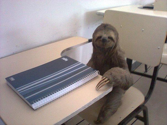 bizarre photos sloth desk
