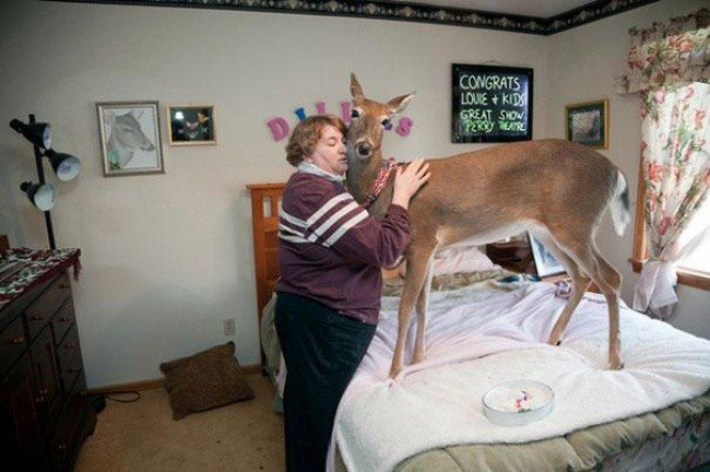 bizarre photos woman deer