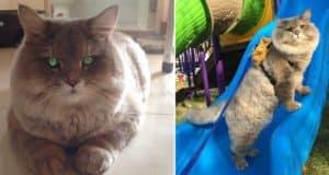bone-bone-fluffy-cat-thailand