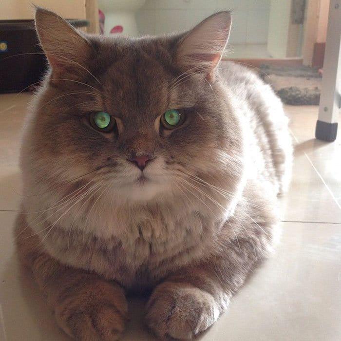 bone bone thai cat