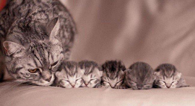 cat parenting photos kitten row
