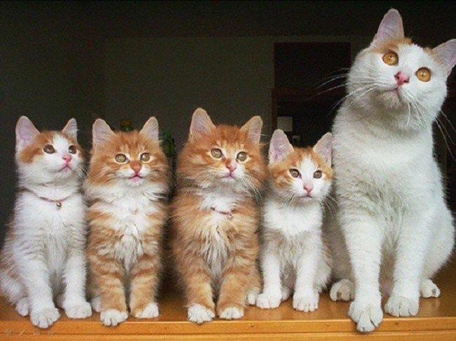 cat parenting photos row