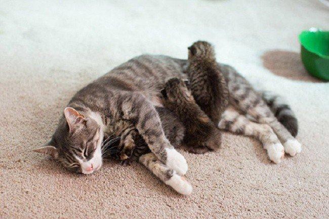 cat parenting photos sleeping kittens