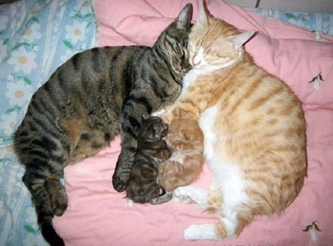 cat parenting photos snuggling kittens