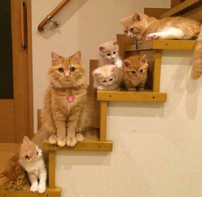 cat parenting photos stairs