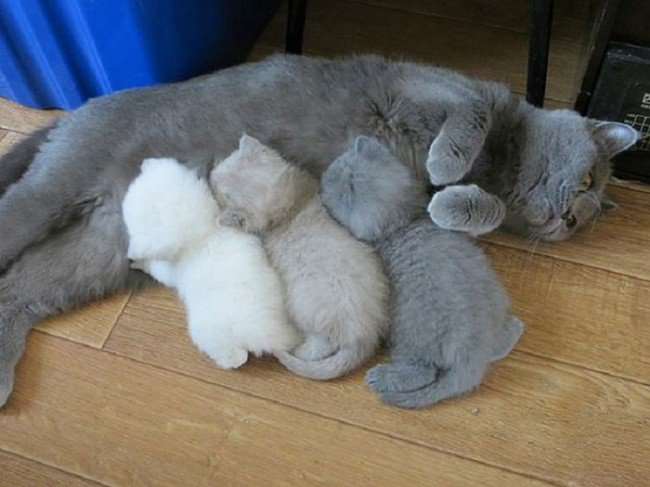 cat parenting photos three kittens