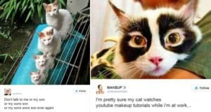 cats owning internet