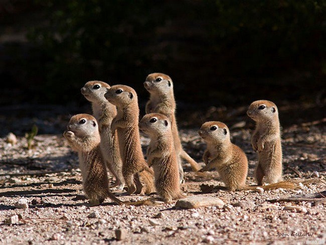 cute baby animals prairie dogs
