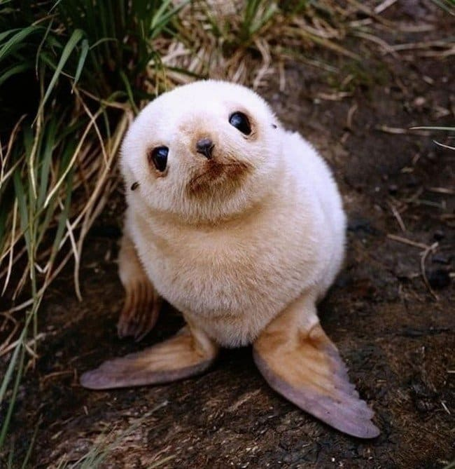 cute baby animals seal