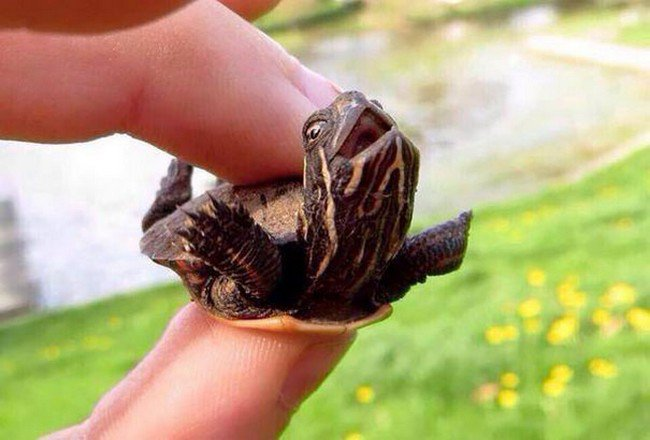 cute baby animals turtle hand