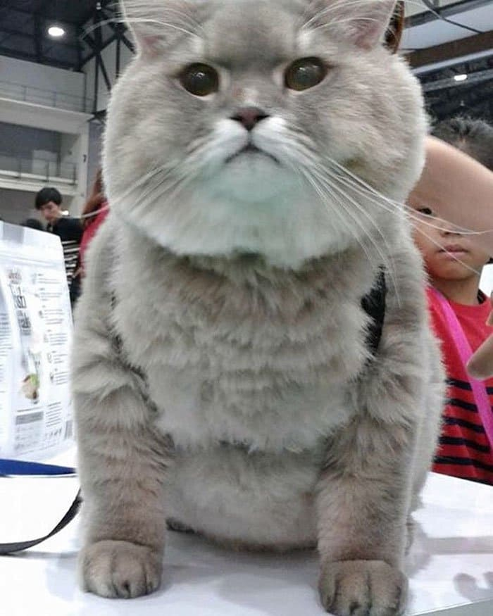 fluffy bone bone cat