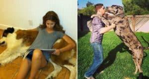 funny big dog photos
