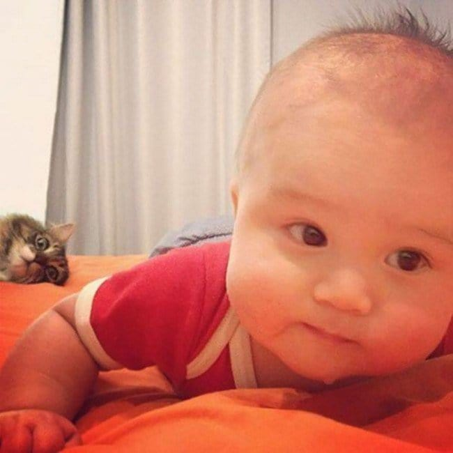 funny cat photobombs baby cat bed