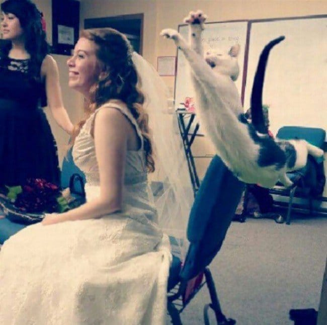 funny cat photobombs bride cat jumping