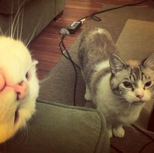 funny cat photobombs cats