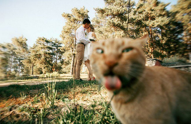 funny cat photobombs couple cat tongue