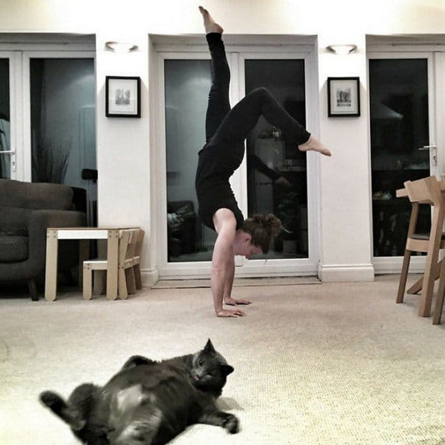 funny cat photobombs girl handstand cat sprawling