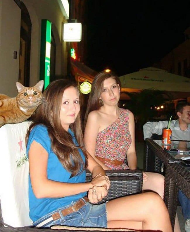 funny cat photobombs girls cat posing