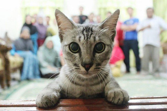 funny cat photobombs group cat front