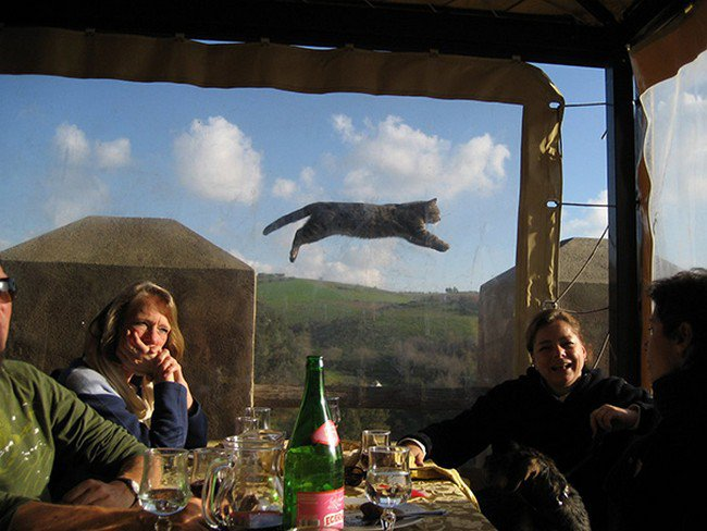 funny cat photobombs group photo cat jumping