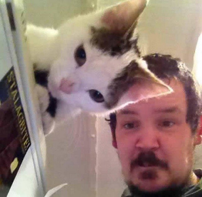 funny cat photobombs man cat looking down