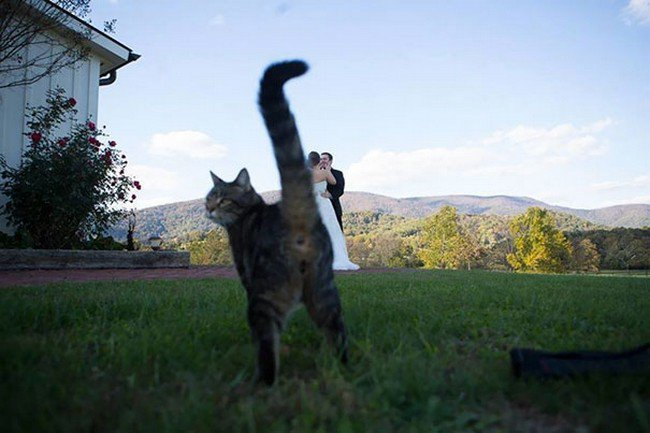 funny cat photobombs married couple cat butt