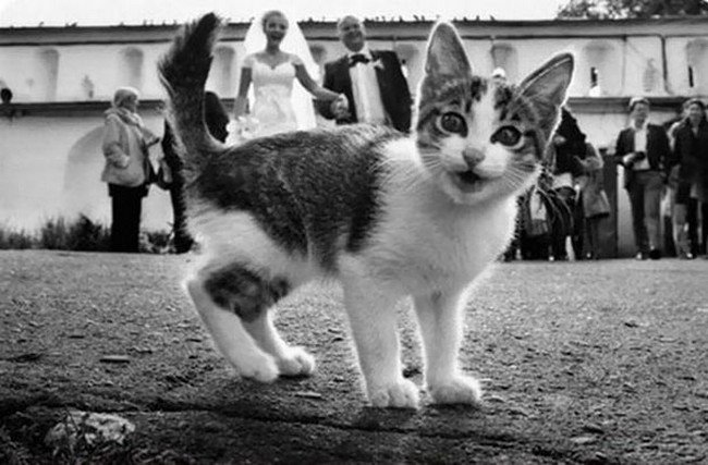 funny cat photobombs married couple