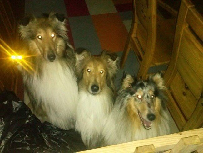funny cat photobombs trio dogs