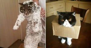 hilarious cat fails