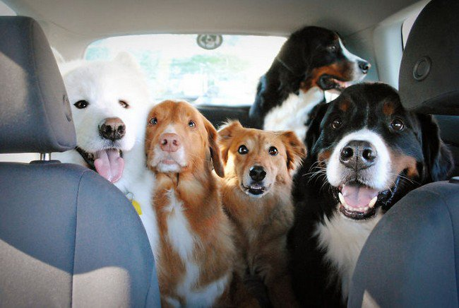 life with dogs five car