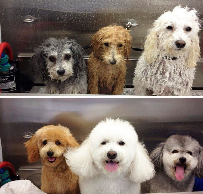 life with dogs groomed before after