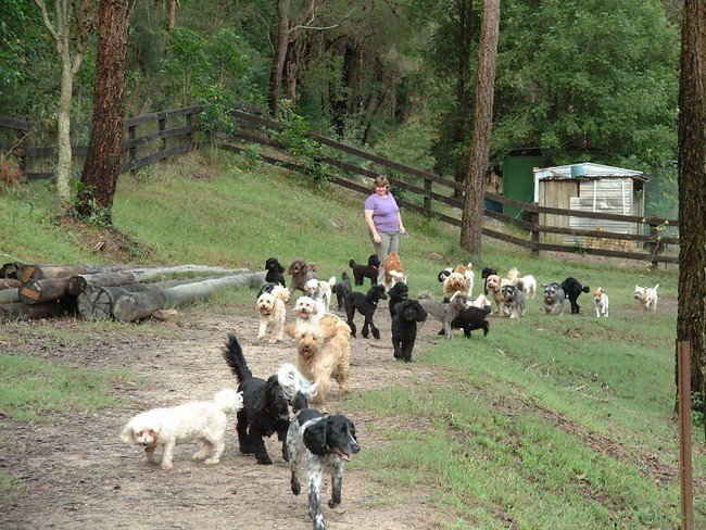 life with dogs outdoor pack