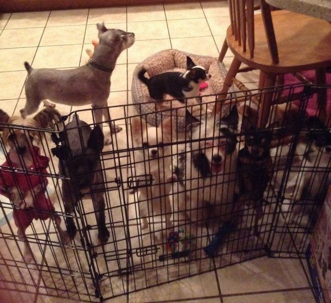 life with dogs pack gate