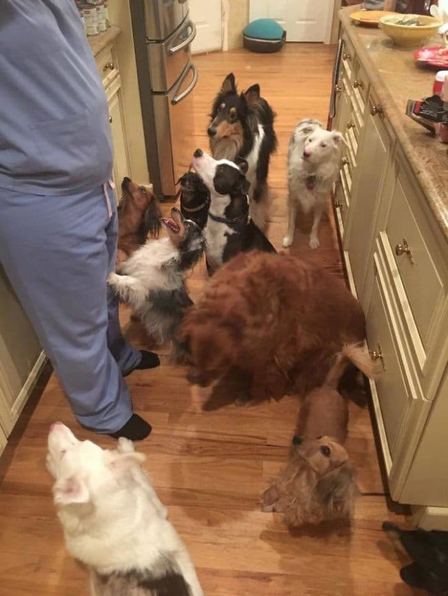 life with dogs pack kitchen