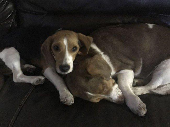 life with dogs sleepy cuddling