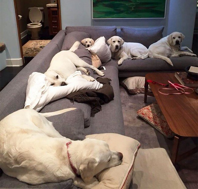 life with dogs sofa pack