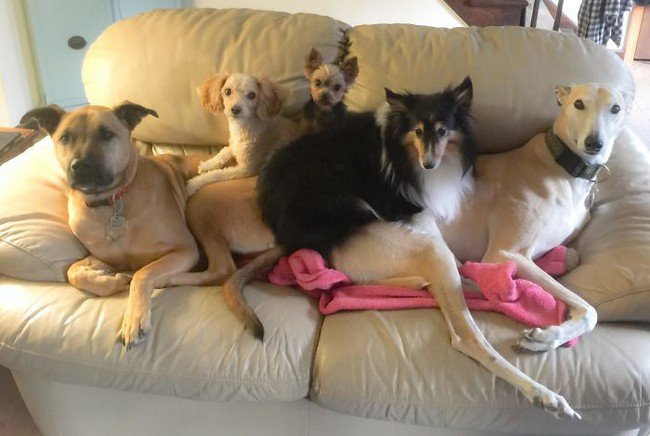 life with dogs sofa