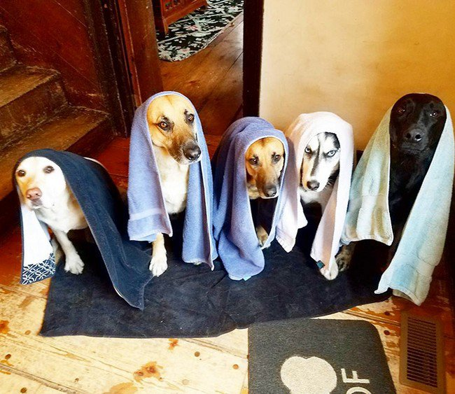 life with dogs towel heads