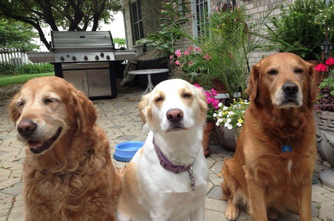 life with dogs trio stoned looking