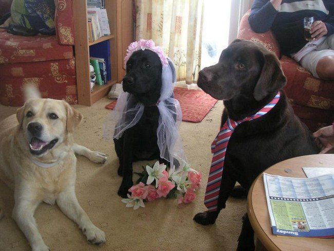 life with dogs wedding