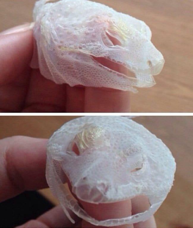 lizard shed skin in one go