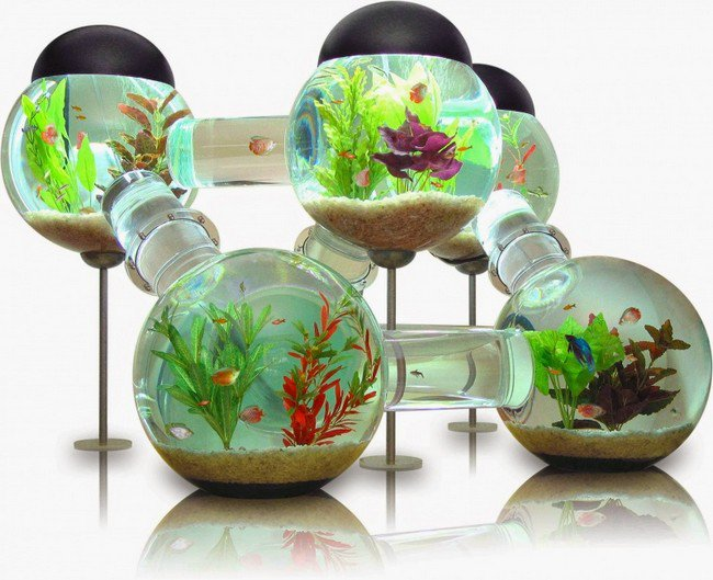 millionaire wishlist items labyrinth aquarium