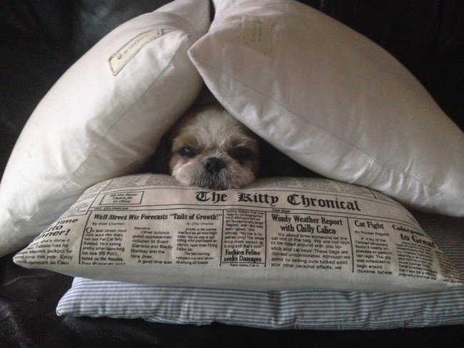 pets night in dog pillows