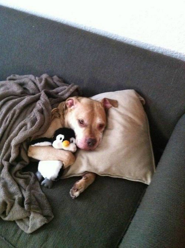 pets night in dog snuggle penguin