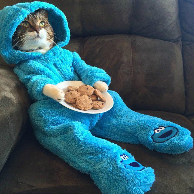 pets night in onesie cookie monster cat