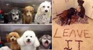 photos many dogs