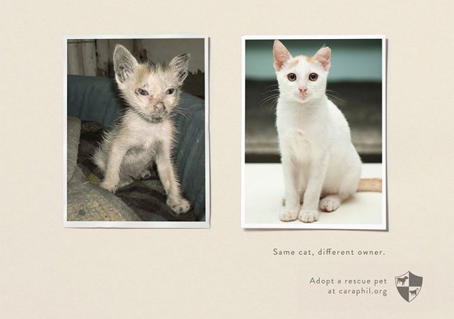powerful advertising same cat different owner