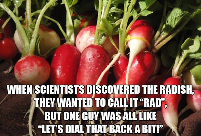 scientists wanted to call the radish rad